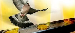 Optical Bird Gel