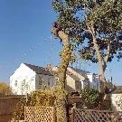 Tree Removal Surrey