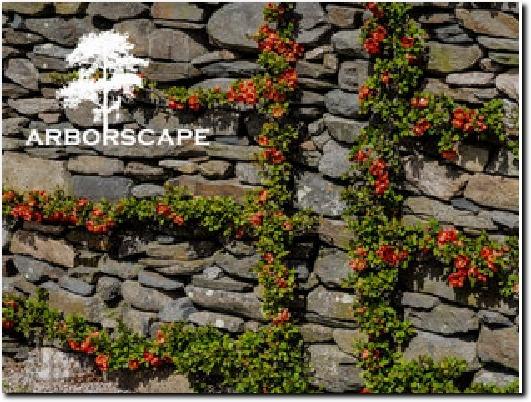 http://www.arborscape.uk website