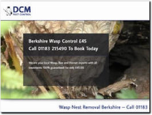 http://www.wasp-nest-removal-berkshire.co.uk/ website